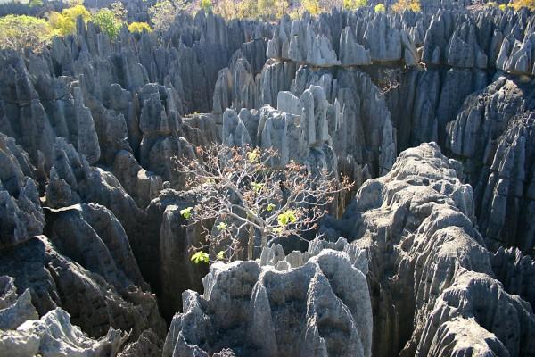 Árboles sobre formaciones rocosas