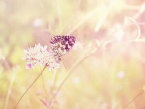 Postal: Mariposa posada en unas florecillas