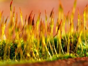 Postal: Plantas creciendo