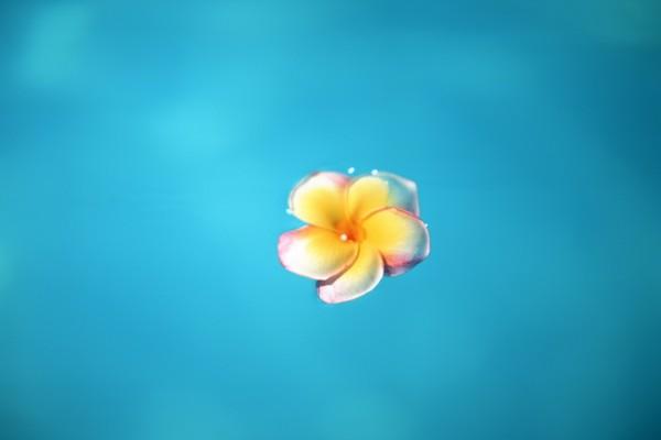 Delicada flor en el agua azul