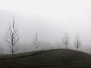 Postal: Árboles y niebla