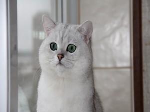 Postal: Un lindo gato blanco