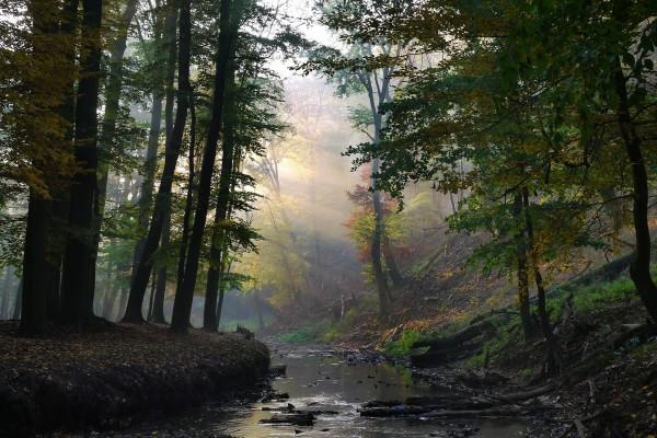 Un río en el interior de un bosque