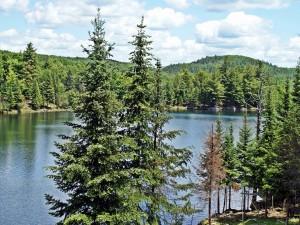 Río y bosque en Canadá