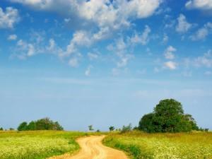 Postal: Camino de tierra en un campo