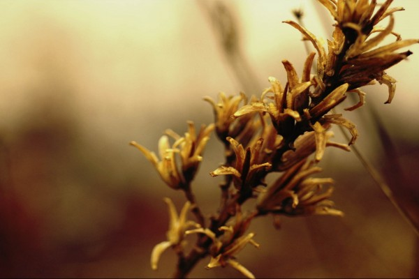 Rama con pequeñas flores rotas