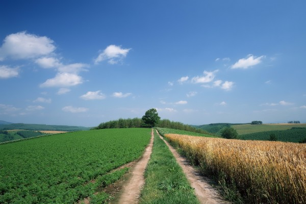 Camino entre campos de cultivo