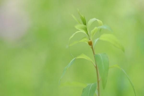Pequeño insecto en una rama con hojas verdes
