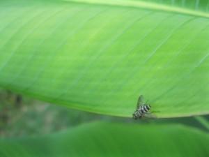 Insecto volador sobre una hoja