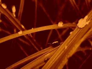 Postal: Insecto entre las hojas mojadas
