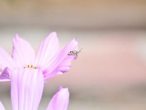 Postal: Un bonito insecto sobre una flor lila