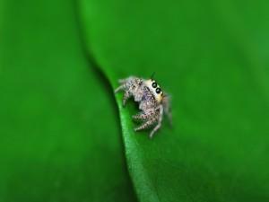 Araña sobre una hoja verde