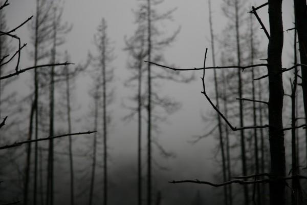 Árboles desnudos en invierno