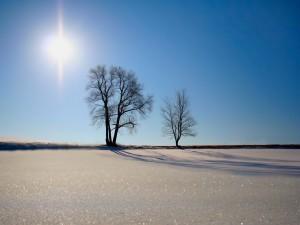 Postal: Nieve brillando a la luz del sol