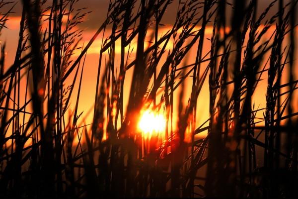 El sol del atardecer entre las plantas