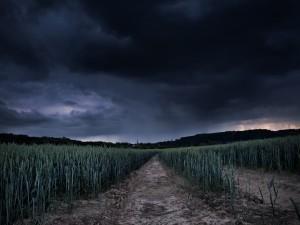 Postal: Campo con trigo verde