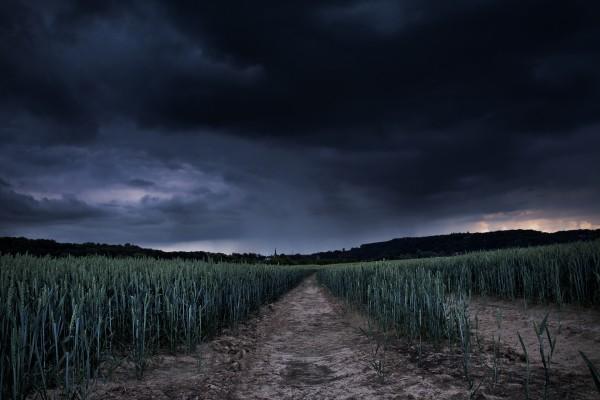 Campo con trigo verde