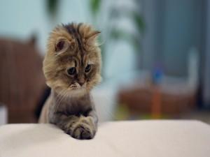 Gatito reposando las patas delanteras