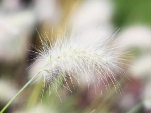 Una curiosa planta