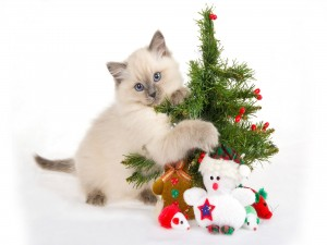 Postal: Gato abrazando un árbol de Navidad