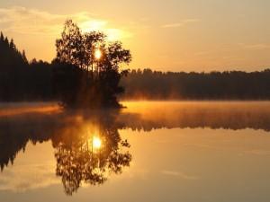 El sol tras un árbol reflejados en el agua
