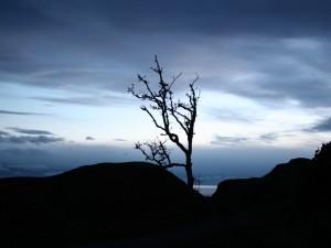 Árbol y rocas es la oscuridad de un lento amanecer