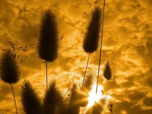 Plantas tapando al sol del atardecer