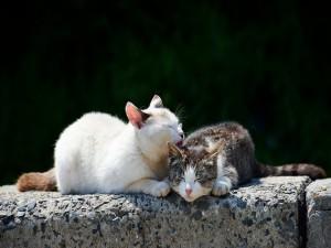 Dos gatos adormilados al sol