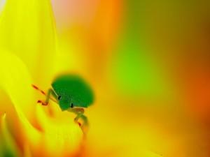 Un insecto verde sobre una flor amarilla
