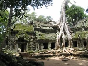Arquitectura del templo Angkor Wat invadida por las grandes raíces de un árbol