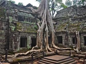 Postal: Árbol creciendo en el templo de Ta Prohm (Ankor Wat)