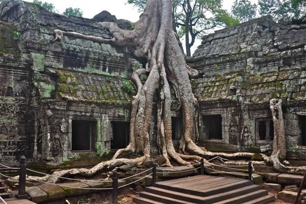 Árbol creciendo en el templo de Ta Prohm (Ankor Wat)
