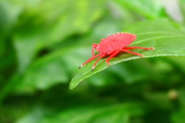 Insecto rosa sobre una hoja