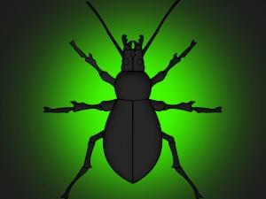Postal: Gran escarabajo en fondo verde