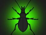 Gran escarabajo en fondo verde