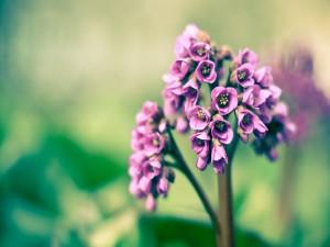 Conjunto de pequeñas flores color lila