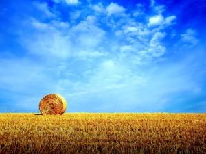 Postal: Cielo azul sobre un campo de paja
