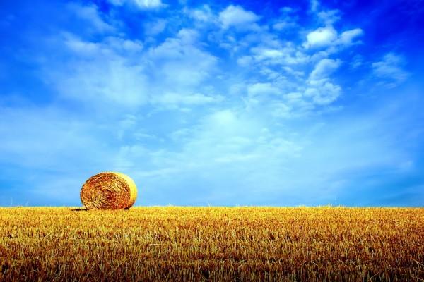Cielo azul sobre un campo de paja