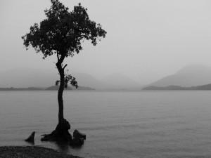 Árbol en la orilla del lago