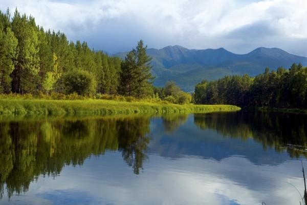 Un río fluyendo entre árboles y plantas verdes