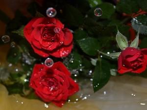 Postal: Gotas de agua sobre unas rosas rojas