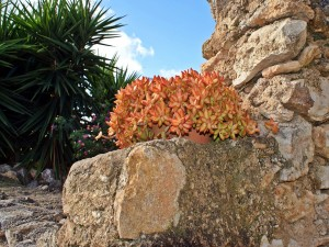 Plantas junto a una pared de piedra