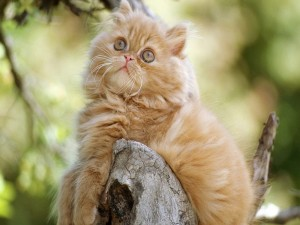 Gatito sobre un tronco