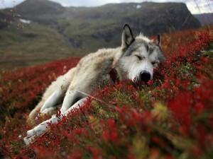 Perro descansando entre las flores