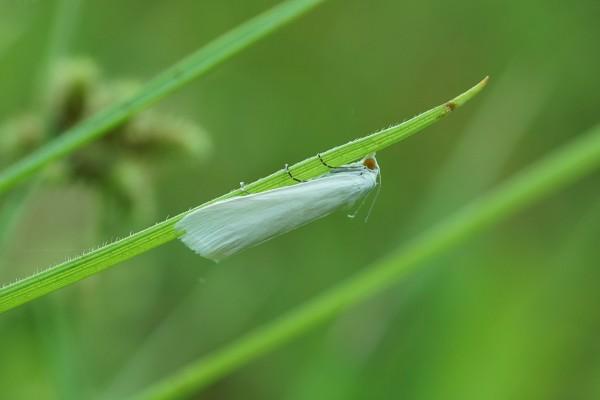 Hoja con un insecto
