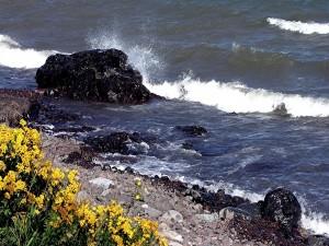 Flores y piedras en la orilla del mar