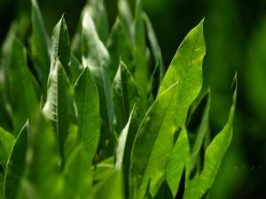 Hojas verdes en una planta