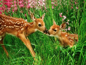 Postal: Pequeños ciervos en un prado con flores