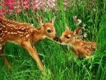 Pequeños ciervos en un prado con flores