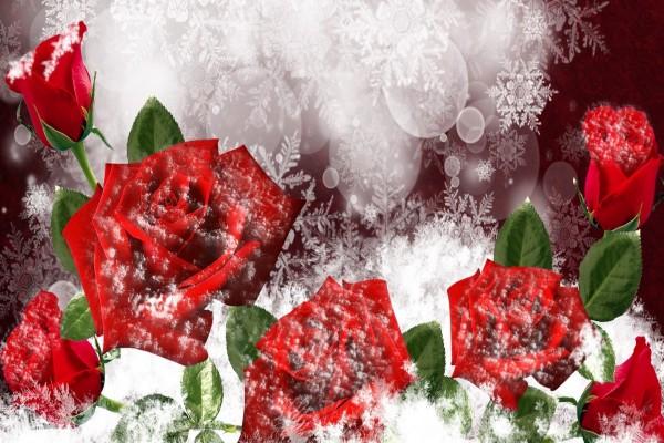 Maravillosas rosas rojas y copos de nieve